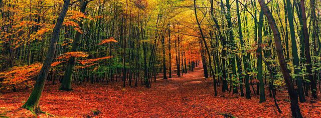 秋 キャンプ