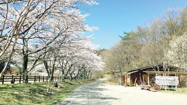 東京から行けるお花見キャンプ場|桜の季節を前に関東のキャンプ場をチェック
